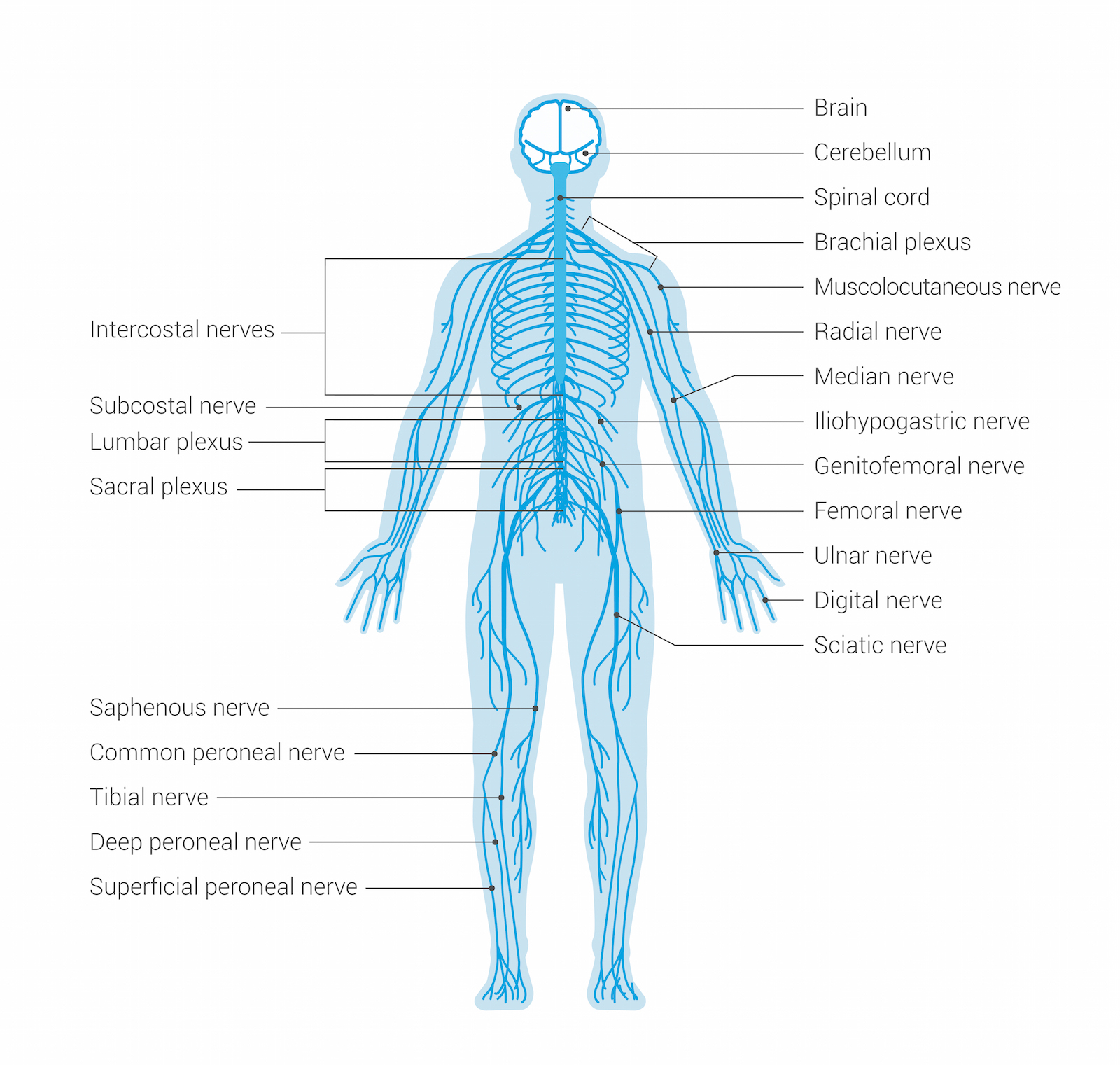The Nervous System Ignite Chiropractic